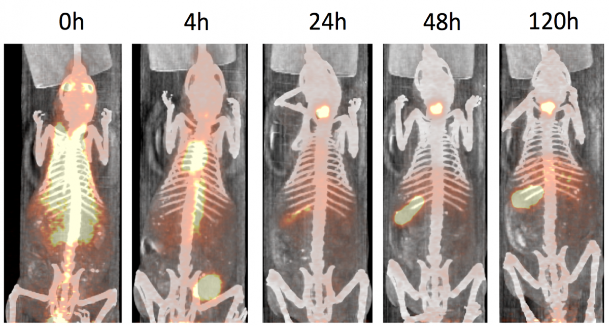 Figure 1: microPET imaging of I-124 labeled gold nanostars at sequential time points