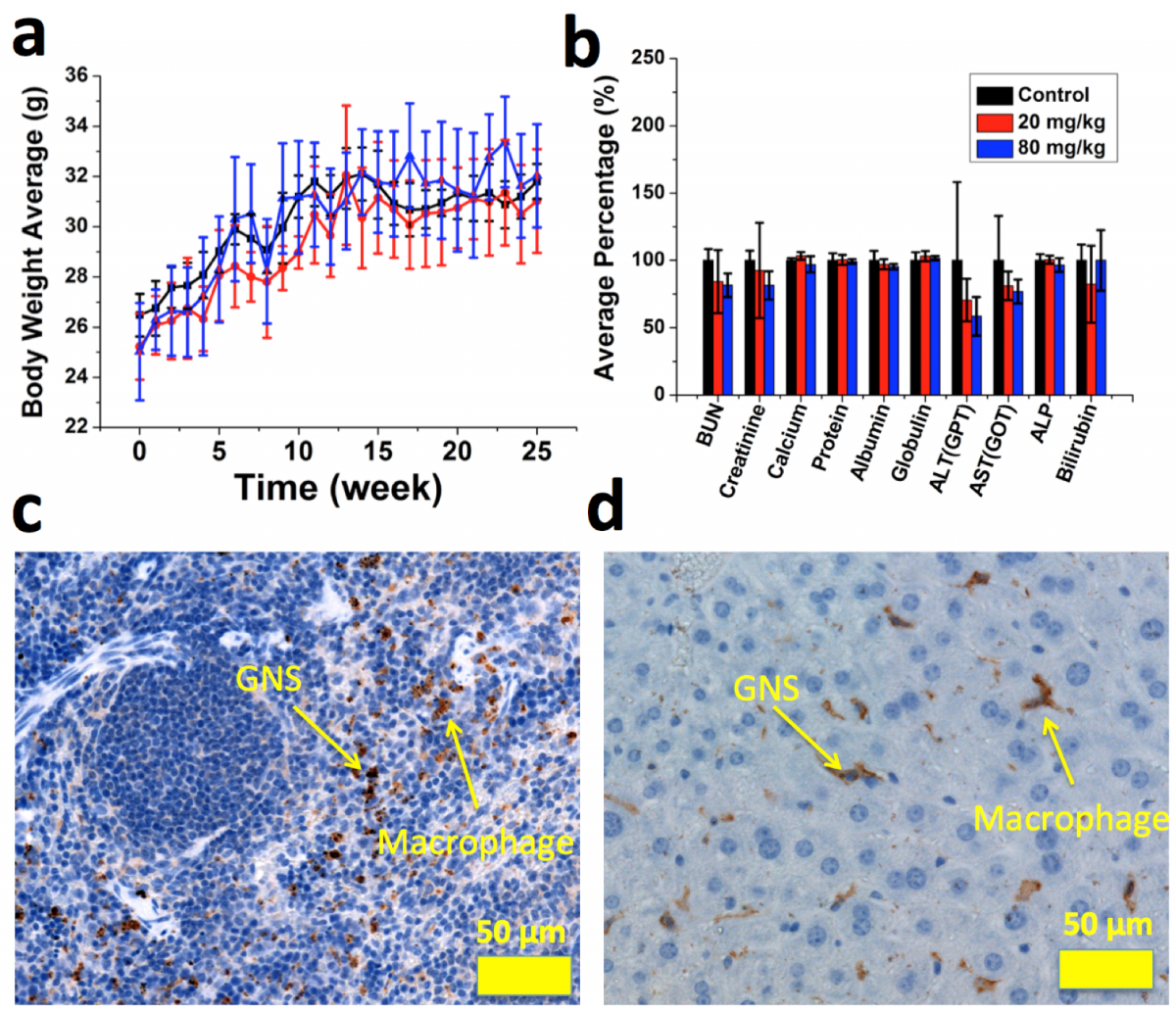 Figure 3: a) longitudinal average mice bodyweights for control (black) and gold nanostar injection groups (20 mg/kg (red) or 80 mg/kg (blue)). b) blood chemistry test results. C) & D) F4/80 IHC staining for spleen (c) and liver (d) to show macrophages, without a significant inflammatory response seen